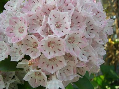 五月の花その2hana Blogso Netブログ
